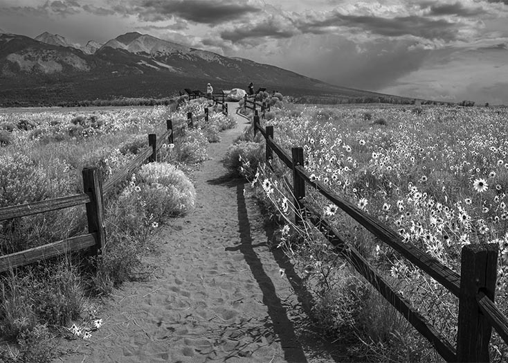 4778_Different_Streets_mountain_sunflowers-BW copy.jpg